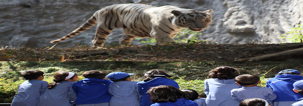 the fight for survival of the white tigers Reproduction in tigers is a very important part of their life cycle, both for them and for the human beings committed to ensuring the survival of their species.